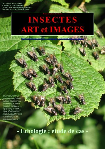 INSECTES ART et IMAGES - Eric GEIRNAERT - Free