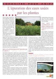 L'épuration des eaux usées par les plantes - Arehn