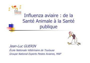 L'influenza aviaire - Avicampus