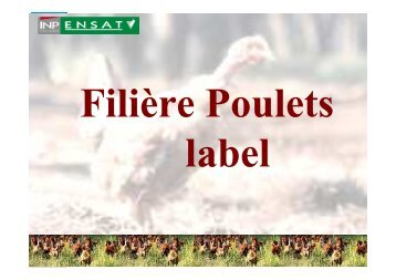 poulets label site - Avicampus