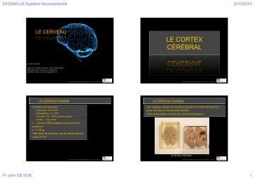 Cerveau (4diapos/page) - Faculté de médecine de Montpellier