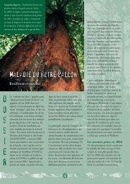 Maladie du hêtre wallon : Evolution et mesures - Portail ...