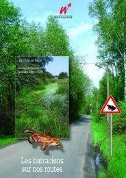 Les batraciens sur nos routes - Portail environnement de Wallonie
