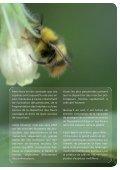 Fleurs sauvages et prairies fleuries pour nos pollinisateurs - Portail ... - Page 3