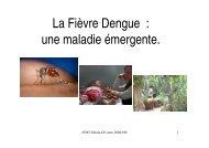 Dengue-Essentiel - Institut de la francophonie pour la médecine ...