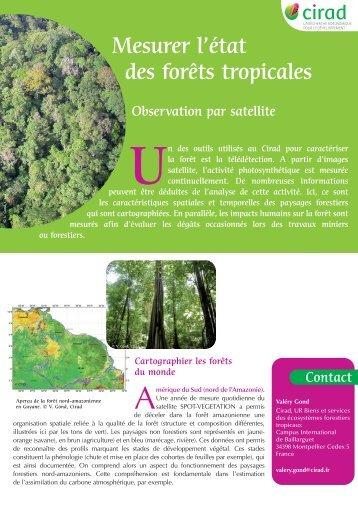 Mesurer l'état des forêts tropicales - une compétence du Cirad
