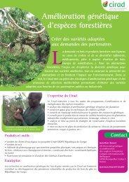 Amélioration génétique d'espèces forestières - compétence du Cirad