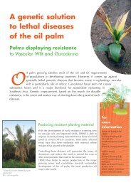 A genetic solution to lethal diseases of the oil palm - Cirad
