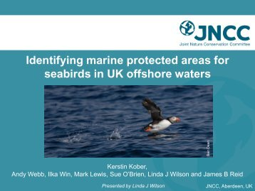 Identifying marine protected areas for seabirds in UK ... - JNCC - Defra
