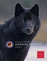 Annual Report 2007 - Defenders of Wildlife