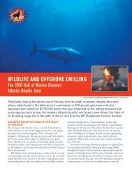 Wildlife and OffshOre drilling - Defenders of Wildlife
