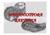 μεθανιοτροφα βακτηρια