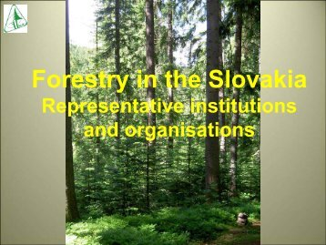 Forestry in the Slovakia