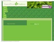 Central Texas Gardener - Texas Everbearing Fig - Figs 4 Fun