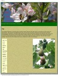 Plant info - Figs 4 Fun