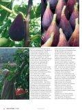 Il Figo Moro, cibo vero e sfizio - Figs 4 Fun - Page 2