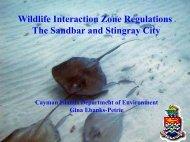 Stingray City - Caribbean Tourism Organization