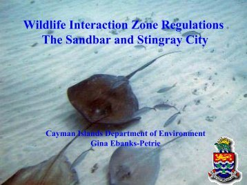 Stingray City - Caribbean Tourism Organization