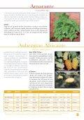 planning de semis oignons en conditions tropicales ... - FIDAfrique - Page 7