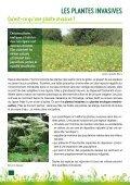 Des alternatives aux invasives - Page 4