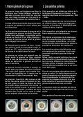 Les assiettes imprimées, 1828-1838 - MuSées de Sarreguemines - Page 2
