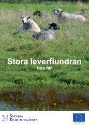 Stora leverflundran hos får - Svenska Djurhälsovården