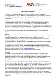 Vaccination av alpackor - Svenska Djurhälsovården