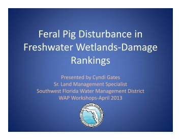 Feral Pig Disturbance Presentation - Southwest Florida Water ...