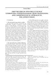 first record of pipistrellus kuhlii - Székely Nemzeti Múzeum