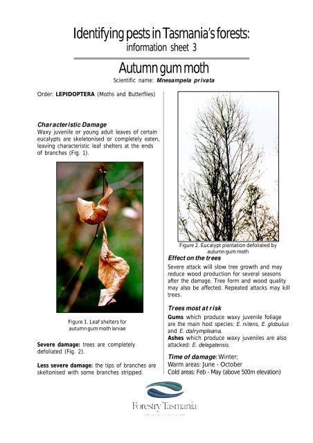 Autumn gum moth - Forestry Tasmania