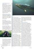 'Hailife' auf den Galapagos - Tauchclub Triton - Bad Vilbel eV - Page 4