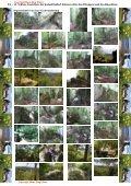 Bilderserie der Blumenvielfalt am Tannberg - Hans - Jörg Eitner - Seite 5