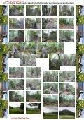 Bilderserie der Blumenvielfalt am Tannberg - Hans - Jörg Eitner - Seite 6