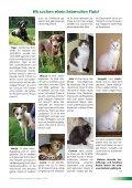 Download - Tierheim-gelting.de - Seite 7