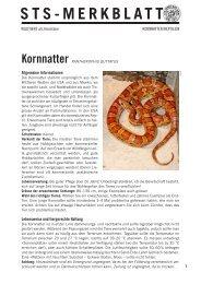Kornnatter - Schweizer Tierschutz STS
