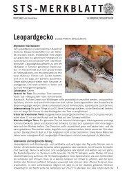 Leopardgecko - Schweizer Tierschutz STS