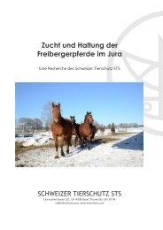 Zucht und Haltung der Freibergerpferde im Jura - Schweizer ...