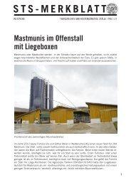 Mastmunis im Offenstall mit Liegeboxen - Schweizer Tierschutz STS