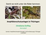 Damit sie nicht unter die Räder kommen: Amphibienschutzanlagen ...
