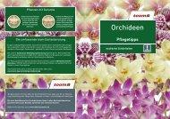 Orchideen - toom Baumarkt