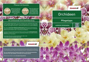 winterharte orchideen. Black Bedroom Furniture Sets. Home Design Ideas