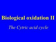Biological oxidation II - TOP Recommended Websites