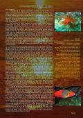 AGUA QUE DA VIDA - Page 4