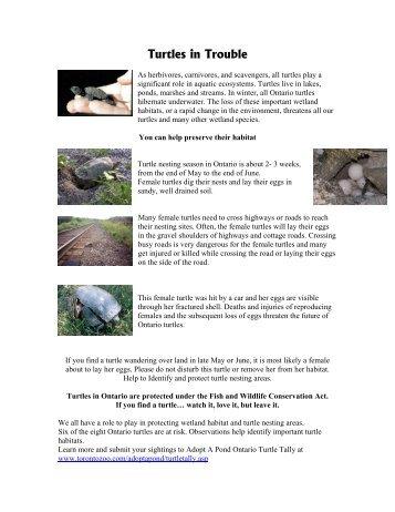 Turtles in Trouble - Toronto Zoo