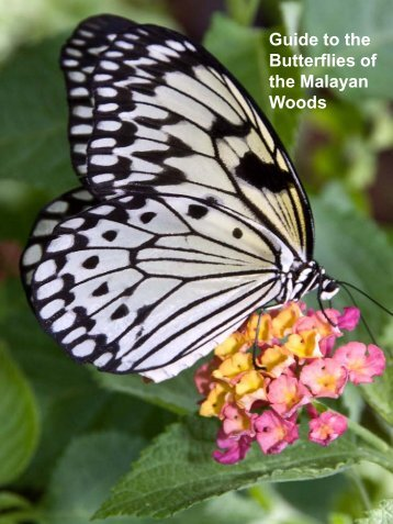 Guide to the Butterflies of the Malayan Woods - Toronto Zoo