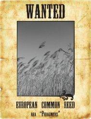 Alien Invaders #1 – European Common Reed - Toronto Zoo