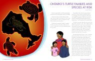 Chapter 3 Ontario's Turtle Families and Species at ... - Toronto Zoo