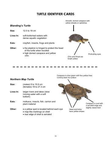 Turtle Identifier Cards - Toronto Zoo