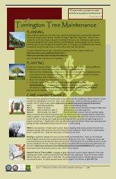 Urban Tree Brochure - City of Torrington, CT
