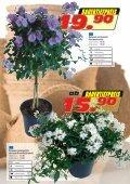 Mediterrane Pflanzen - Seite 2
